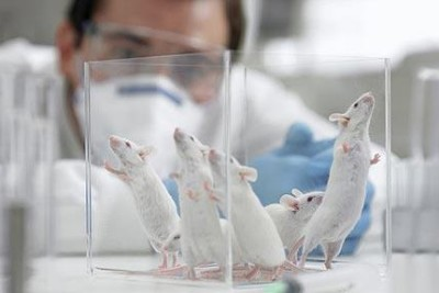 Five lab mice in a glass container