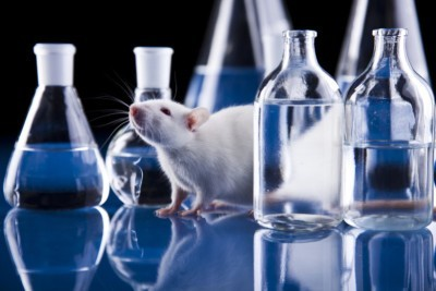 image of mouse and beakers