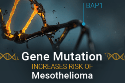 Image of a gene that has BAP1 located. Reads: Gene Mutation Increases Risk of Mesothelioma.