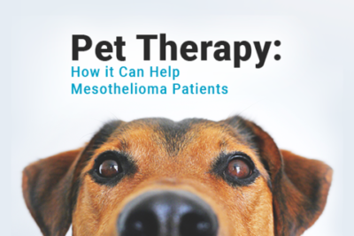Image of a dog. Image reads: Pet Therapy: How it Can Help Mesothelioma Patients