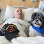 Veteran patient in a hospital bed experiencing pet therapy