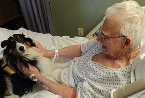 Elder patient with a collie dog having pet therapy